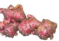 ialah salah satu tumbuhan yang mempunyai banyak faedah Jahe (Zingiber officinale Rosc)