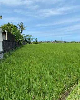Dijual Tanah Murah di Tabanan Bali