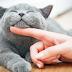Παγκόσμια Ημέρα Γάτας...