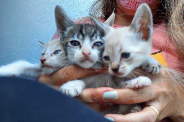 Espaço pet- Gatinhos filhotes para adoção na Ilha Comprida