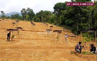 Jual Tanah Bekasi Kota, Kebun Vanili Dan Durian, Dekat Jalan,  WA : 0815.1188.1122
