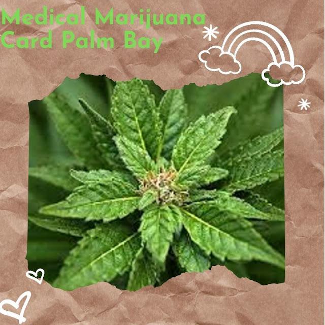 Medical%2BMarijuana%2BCard%2BPalm%2BBay.