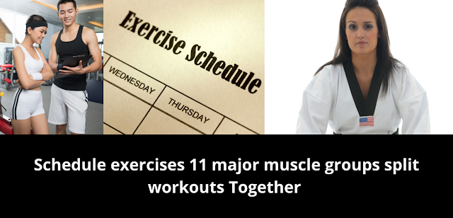 Schedule exercises 11 major muscle groups split workouts Together