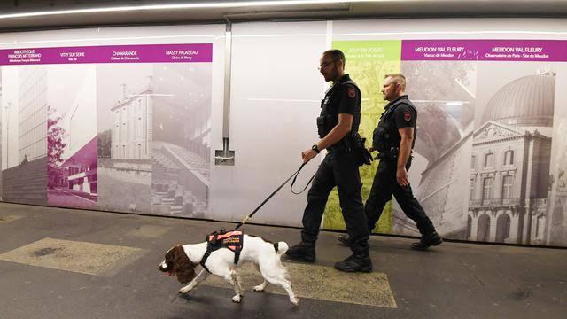Inggris Mulai Uji Coba Deteksi Corona Lewat Anjing Pelacak