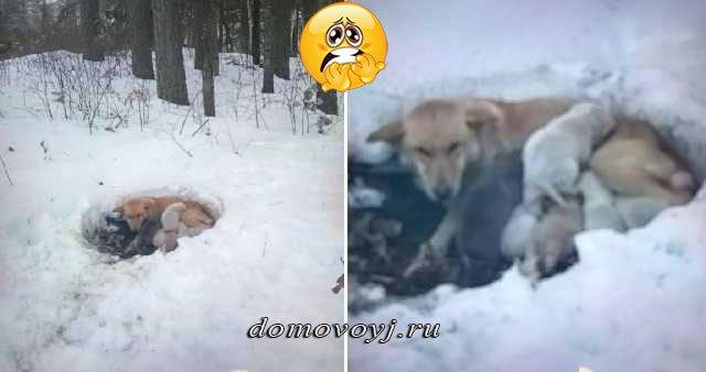 Молодая собачка найдена на снегу, укрывающая телом своих детей от холода