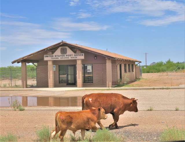 Post office and cows, Topawa, Tohono O'odham Nation, Arizona. July 2019.