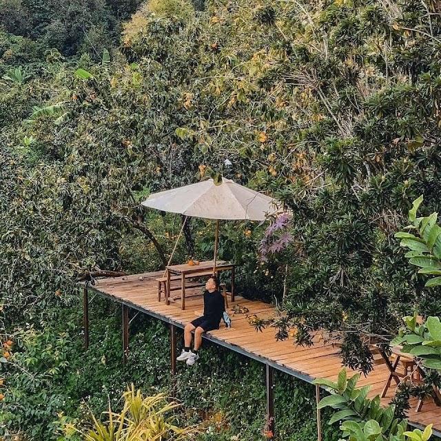 Liêu xiêu cà phê giữa vườn hồng, view thung lũng ở Đà Lạt