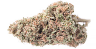 Weed Strains | Seed Reviews | Best Medicinal Strains