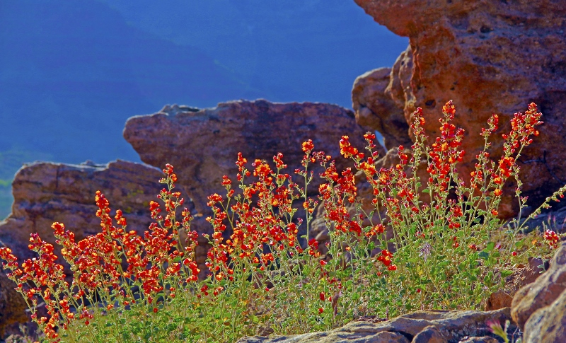 Grub Hub     Blog and Outdoor Ramblings  Desert Flowers in Red Cliffs     The Red Cliffs Desert Reserve is located between St  George and Leeds  Utah