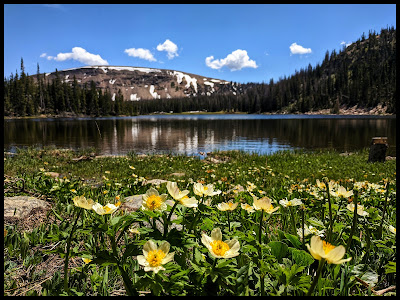 White Marsh Marigold in front of Moosehorn Lake Uintas