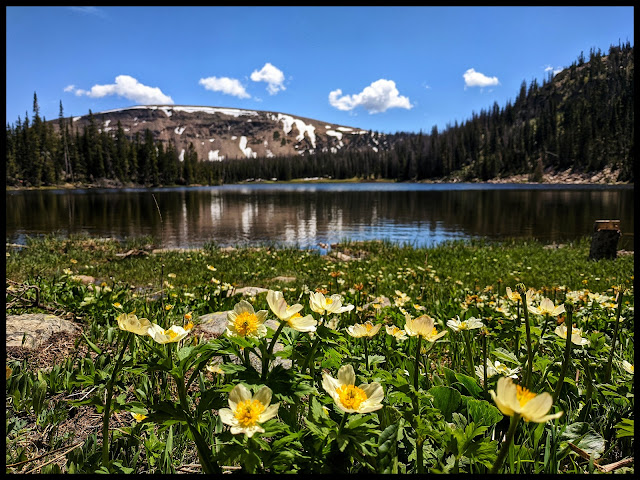 White Marsh Marigold in front of Moosehorn Lake Uintas