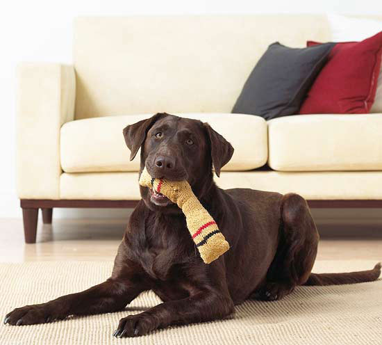 8 Fun Games for Dogs