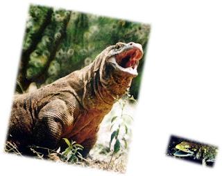 gambar hewan kadal dan komodo