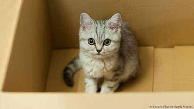 افضل أنواع القطط الاليفة في العالم 2021