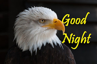 good night with bird images