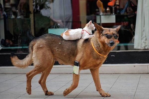 Không phải chó, mèo mới là bá chủ thế giới!