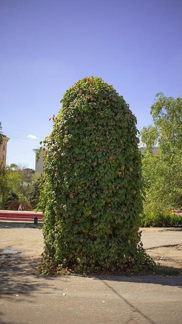 куст лето юг шпион милый плюшей листья
