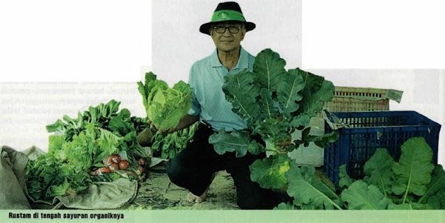 Kisah Sukses Budidaya Pertanian Sayuran Organik