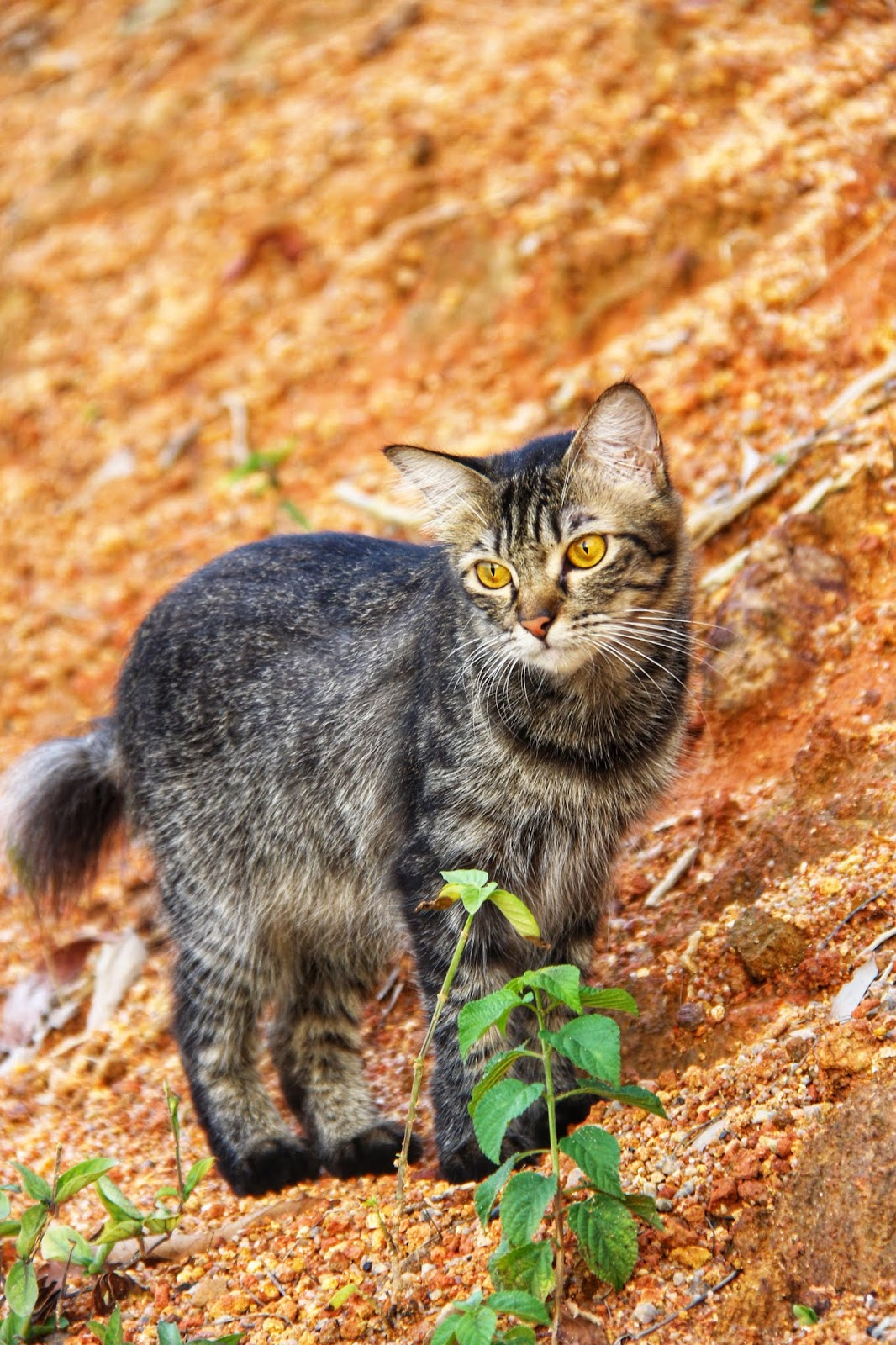 20 Koleksi Gambar Kucing Comel Bernama Tambi 15