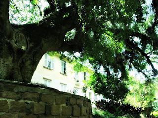 Árvore em Frente ao Prédio de Elis Regina - Vila IAPI, Porto Alegre