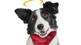 Carta de tu perro ángel