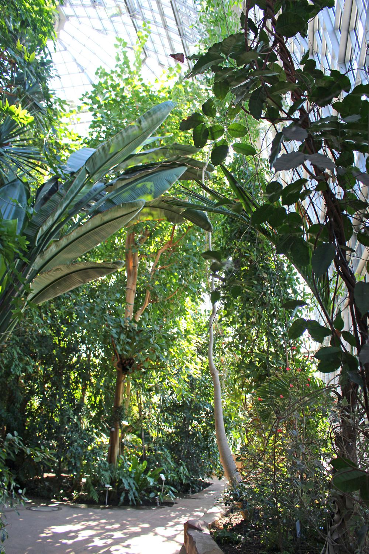 Berlin-Dahlem Botanical Garden greenhouse - travel & lifestyle blog