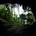 Fauna zona ekoton yang unik: sisi gua yang terabaikan?