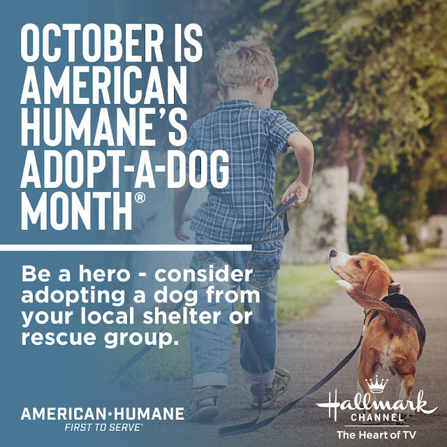 "During American Humane's 38th national ""Adopt-a-Dog Month,"" the organization and Hallmark Channel are urging animal lovers everywhere to save a life by adopting a canine companion in need of a home."