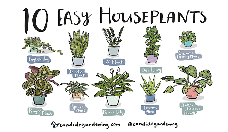 10 Houseplants That Are Actually Easy To Keep Alive #infograohic