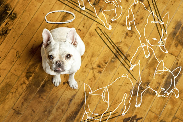Why You Need to Think More About Home Maintenance if You Have Pets