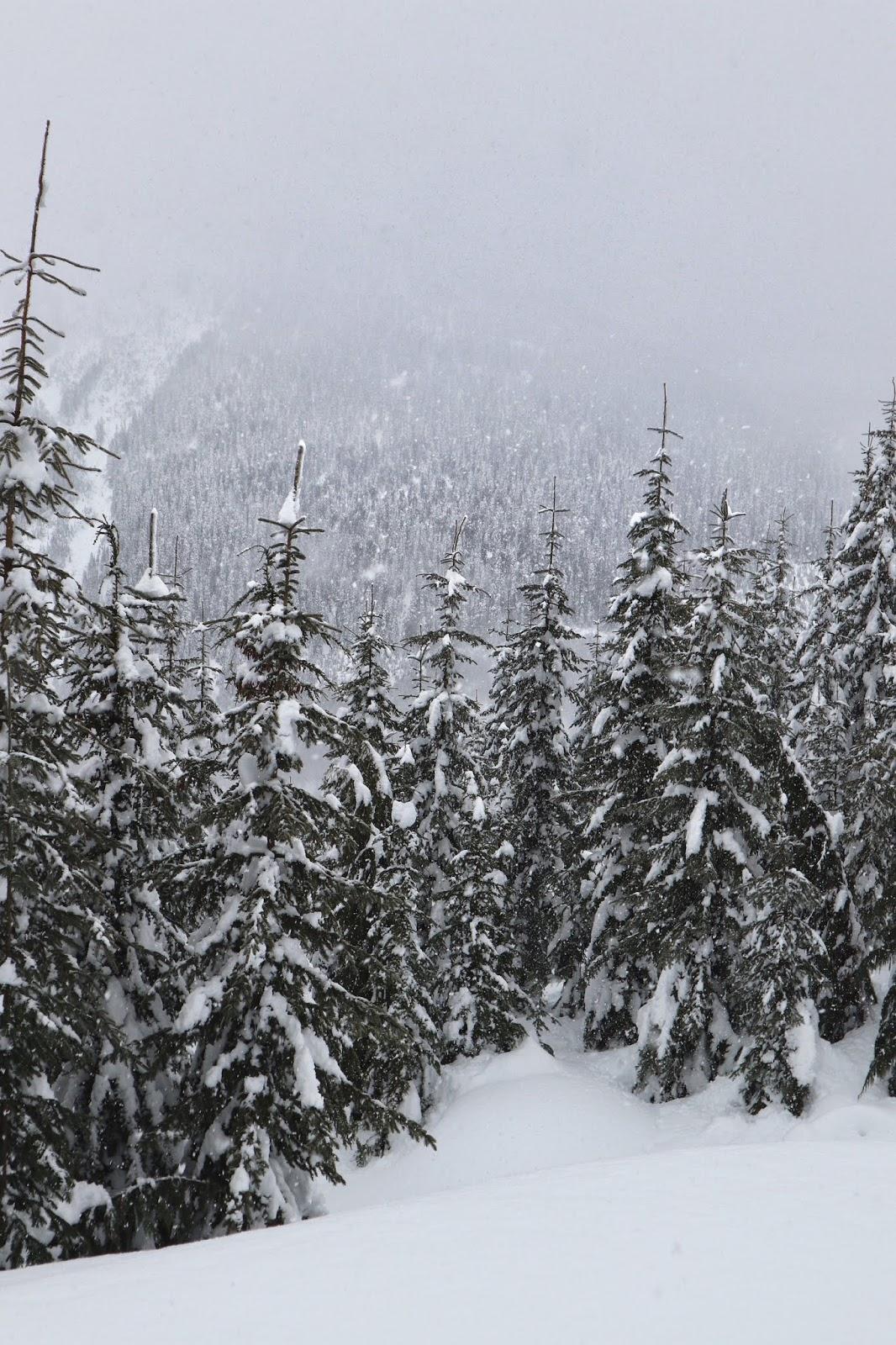 brandywine mountain aleesha harris snowy mountains