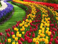 Mengenal Jenis Bunga-bunga Terindah di Indonesia, Apa Saja?