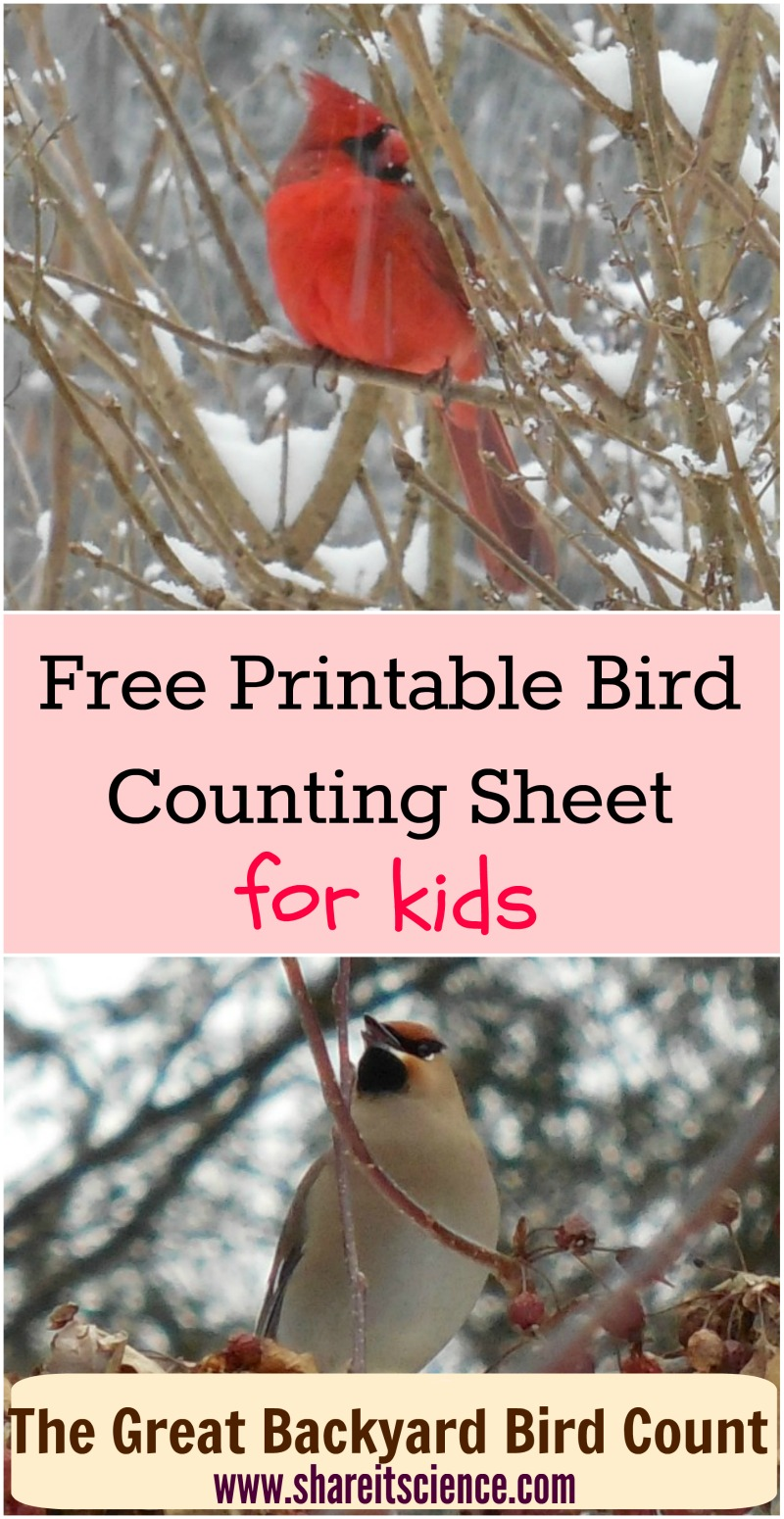 share it science free bird counting printable great backyard