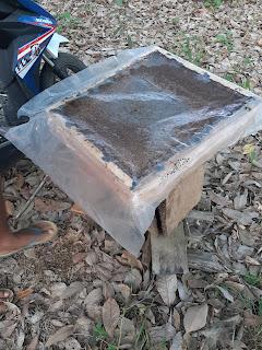 Kotak sarang lebah trigona