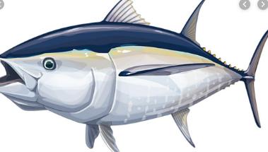 Tuna sirip biru Atlantik