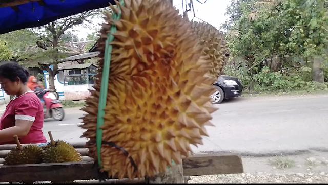 Bikin Ketagihan! Rasa Durian Lokal Desa Jatipohon Manjakan Lidah