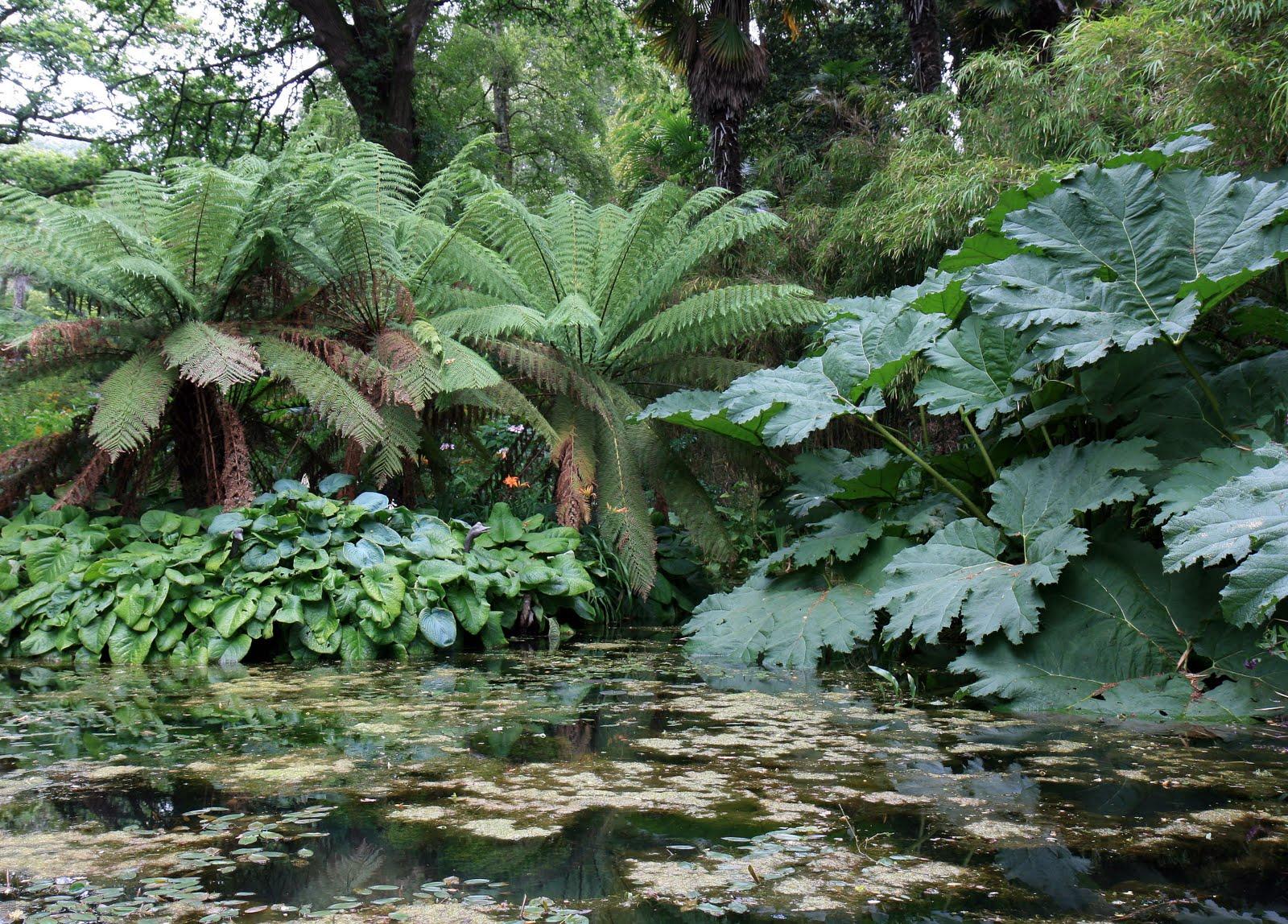 gunnera manicata the garden of eaden