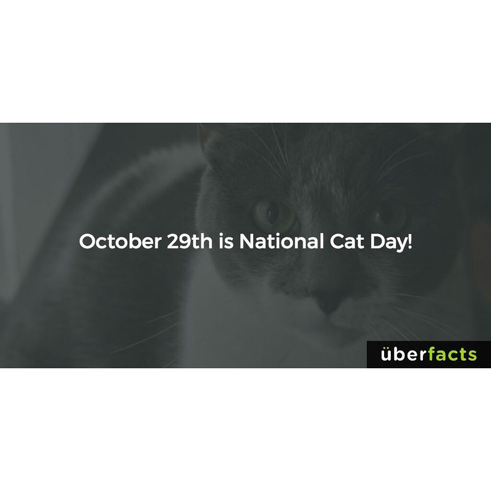 National Cat Day Wishes Awesome Picture