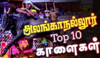 Top 10 | Alanganallur Jallikattu | IBC Tamil Tv