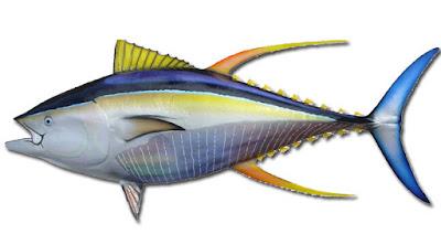 Gambar Ikan Tuna Sirip Kuning
