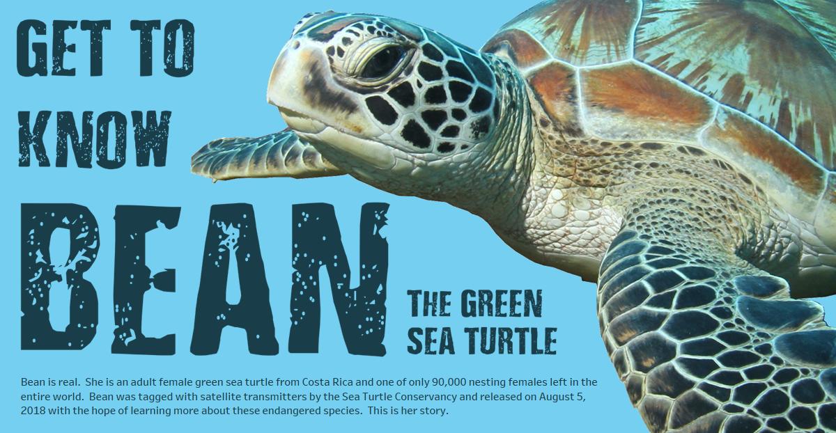 Bean the Green Sea Turtle