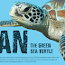 Bean the Green Sea Turtle
