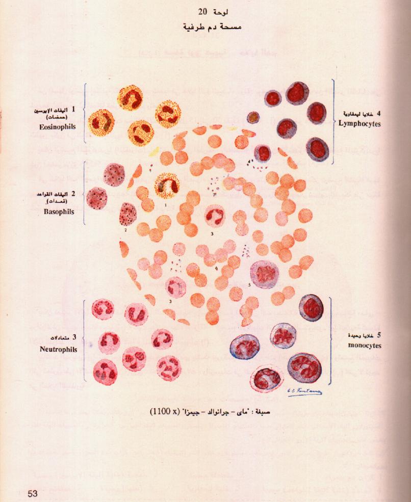 تحميل كتاب علم الانسجة pdf