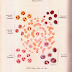 كتاب اطلس الانسجة الطبيعية مرجع لك طالب علم وطالبة pdf