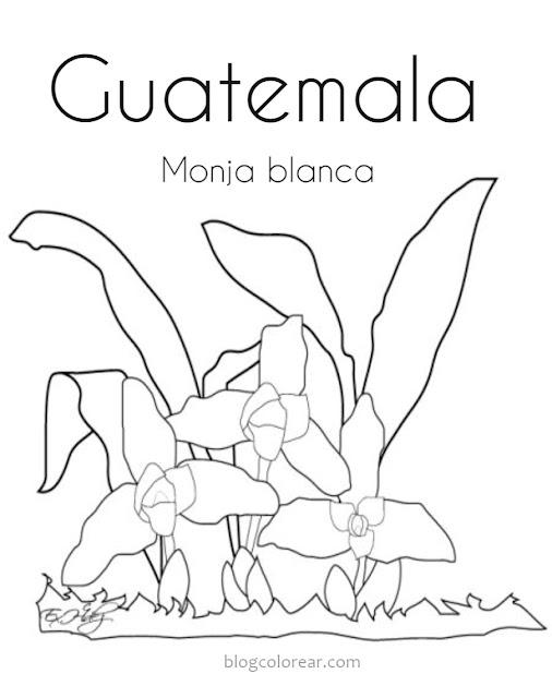 dibujos de Monja blanca Guatemala para colorear