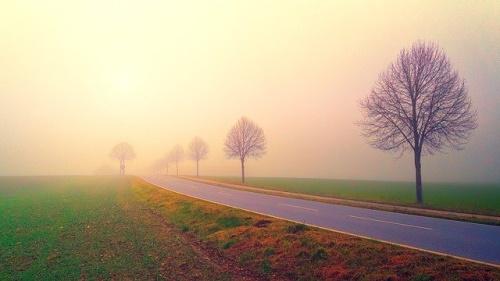 Amanhecer, paisagem com estrada e árvores. #PraCegoVer