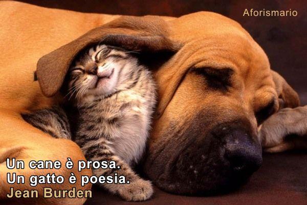 spesso Aforismario®: Cani e Gatti a confronto - Frasi canine e feline LO56