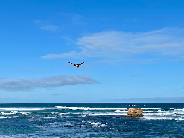 Bird hovering on the wind at Sorrento beach