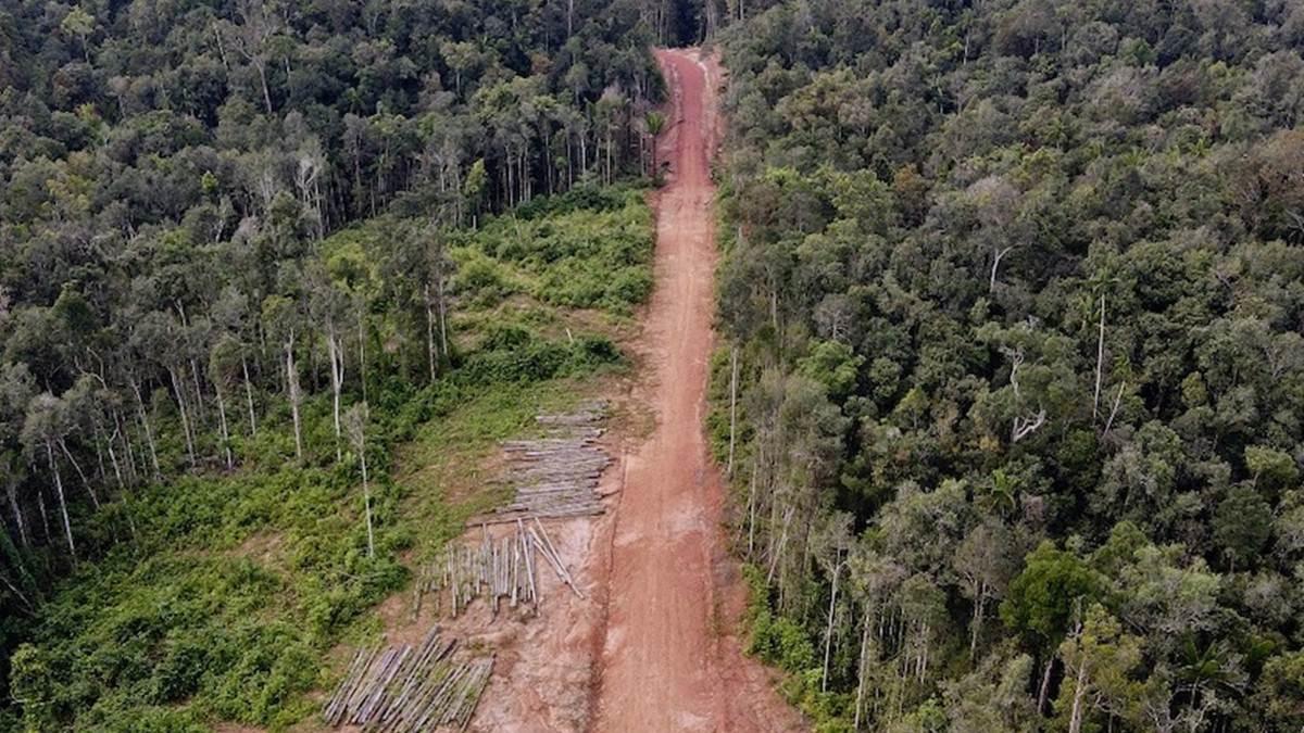 penebangan hutan di Distrik Jari, Kabupaten Boven Digoel, Papua © Yayasan Pusaka