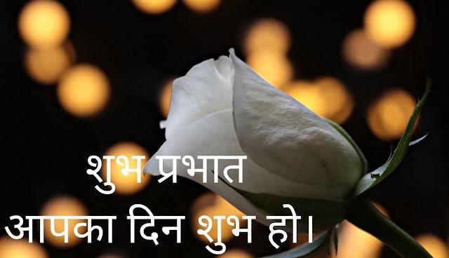 शुभ प्रभात आपका दिन शुभ हो। white rose Image